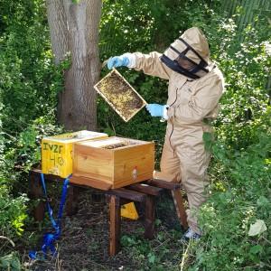 Bijen met imker